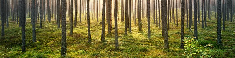 Investir dans une forêt, une valeur refuge qui a du coeur !